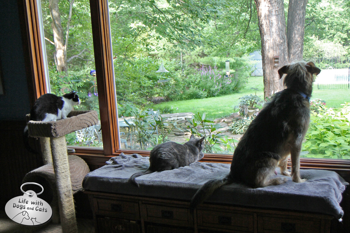 Common interests drew Tucker and the cats together: watching squirrels.