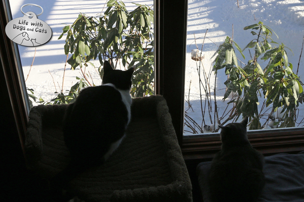 Calvin and Athena watching birds in the snow