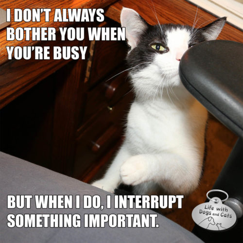I don't always bother you when you're busy but when I do, it's when you're doing something important.