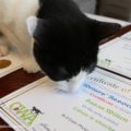 Calvin noses at the certificate I received for a photo of him.