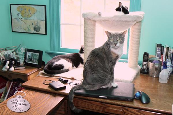Elsa Clair, Calvin and Dawn on my desk