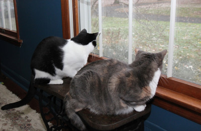 Two cats looking out the window, watching snow flurries.