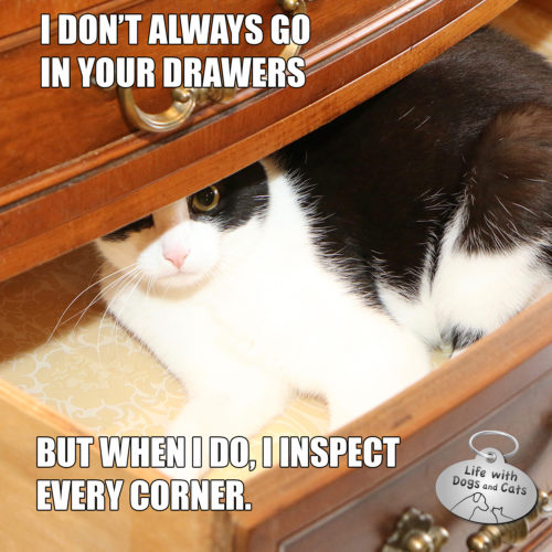 I don't always go in your drawers but when I do I inspect every corner. #MostInterestingCatInTheWorld #StayComfy, my friends.
