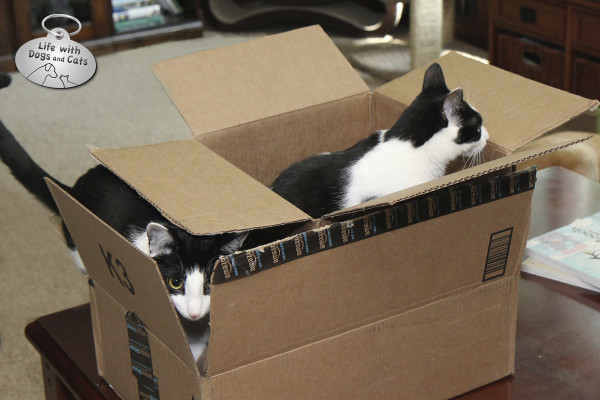 Reasons cats love boxes: You can play kitty inception.