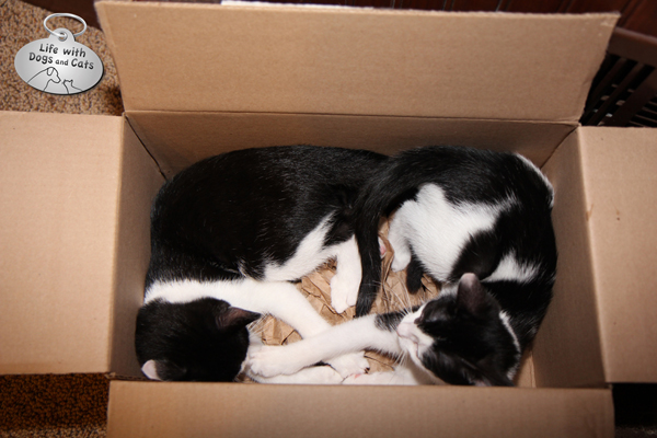 Calvin and Elsa Clair in a box