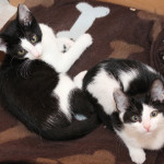 The Continuing Story: Elsa Clair and Calvin Come to Live with Us
