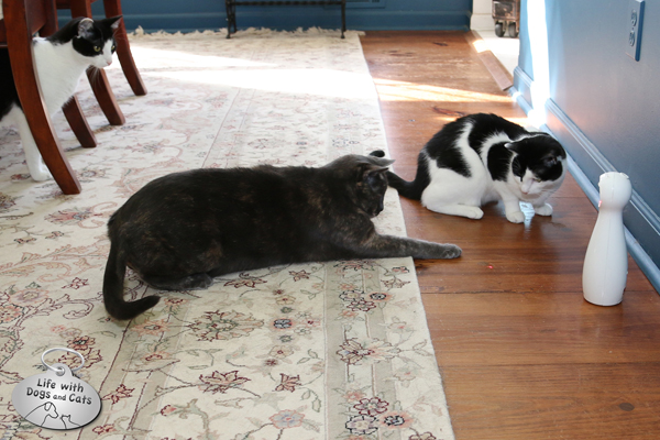 3 cats play with the FroliCat FLIK