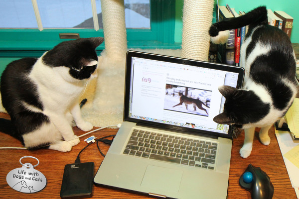 World Cat Day activity: watching amusing videos with friends