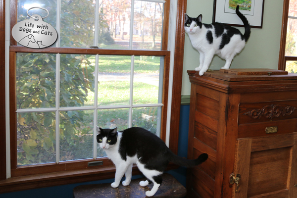 One window, two views. Elsa Clair and Calvin can watch birds building a nest in the magnolia, without getting too much in each others' space.