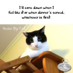 Haiku By Cat: Whichever