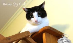 Haiku By Cat: Whichever