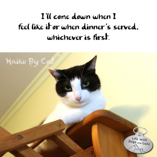 Haiku By Cat: I'll come down when I / feel like it or when dinner's served, / whichever is first.