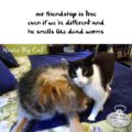 our friendship is true / even if we're different and / he smells like dead worms #HaikuByCat #HaikusDay #MicroPoetry #Cat