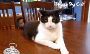 Haiku by Cat: Understand