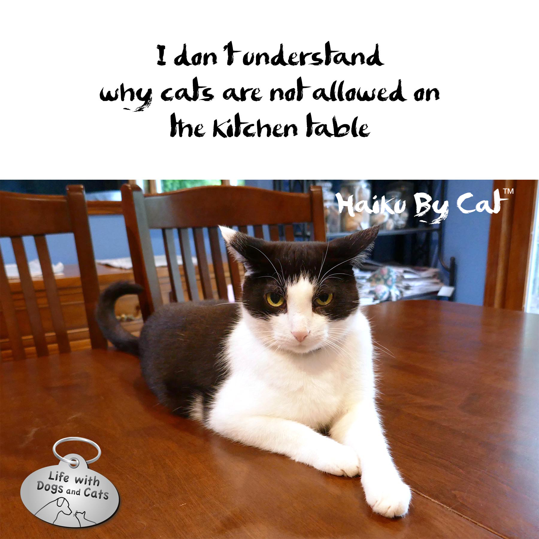 #haikubycat I don't understand / why cats are not allowed on / the kitchen table