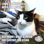 I Don't Always Help With The Laundry #MostInterestingCatInTheWorld