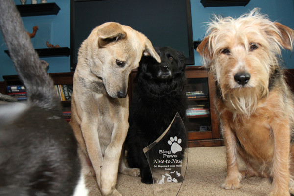 Dogs pose with 2014 Blog Paws Nose to Nose Award