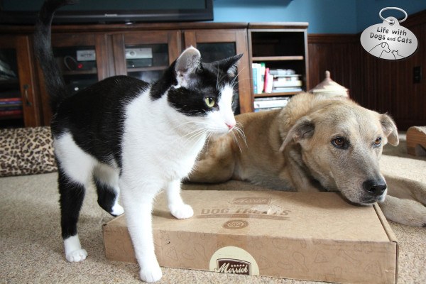Calvin claims ownership of the box of Merrick treats.