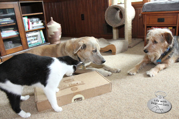 Tucker stares at Jasper and Calvin, whose paw is still on the box of Merrick treats.