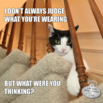 I Don't Always Judge What You're Wearing #MostInterestingCatInTheWorld