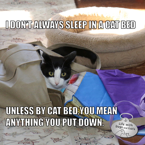 I don't always sleep in a cat bed, unless by cat bed you mean anything you put down