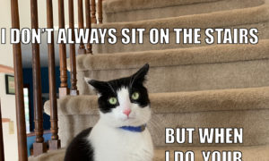 I Don't Always Sit on The Stairs #MostInterestingCatInTheWorld