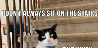 I Don't Always Sit on The Stairs #MostInterestingCatInTheWorld