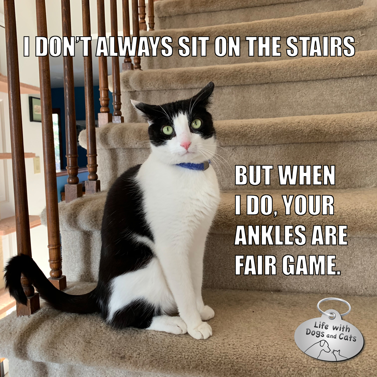 I don't always sit on the stairs, but when I do, your ankles are fair game. #CalvinTKatz #TheMostInterestingCatInTheWorld #StayComfy, my friends