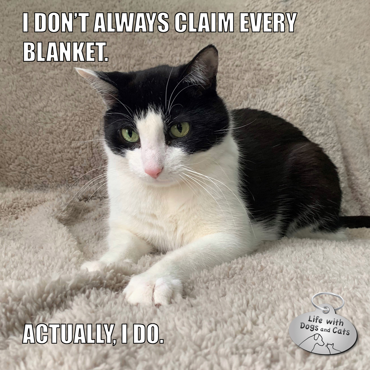 I Don't Always Claim Every Blanket. Actually, I do. #TheMostInterestingCatInTheWorld