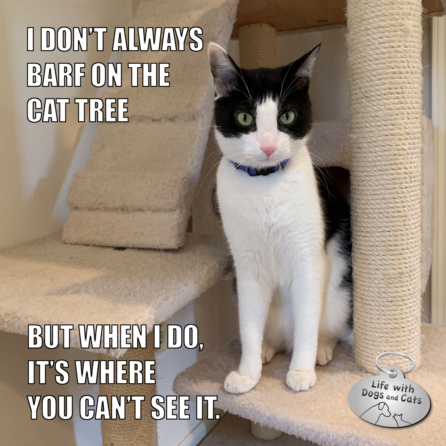 I Don't Always Barf On The Cat Tree But when I do, it's where you can't see it. #TheMostInterestingCatInTheWorld