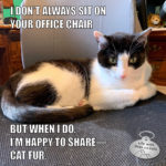 I Don't Always Sit On Your Office Chair #MostInterestingCatInTheWorld