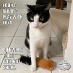 I Don't Always Play With Toys #MostInterestingCatInTheWorld