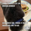 I Don't Always Sit On Your Lap During Dinner