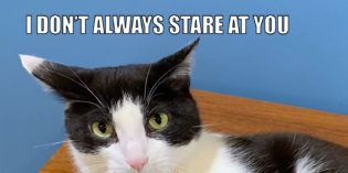 I Don't Always Stare At You #MostInterestingCatInTheWorld