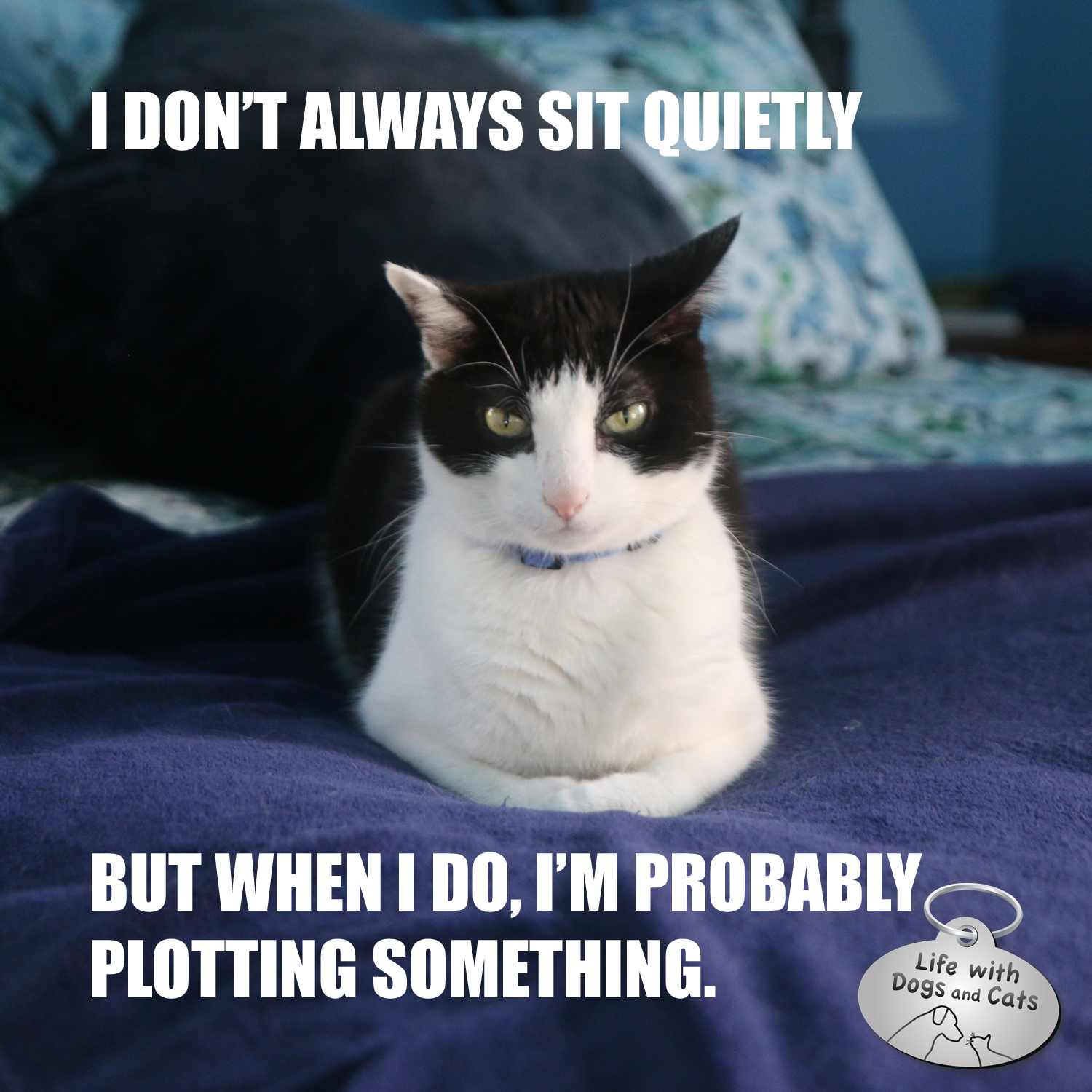 I don't always sit quietly, but when I do, I'm probably plotting something #CalvinTKatz