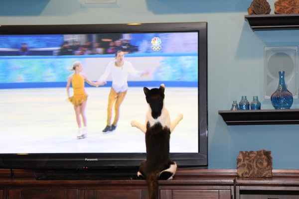 Calvin the cat wants to do figure skating in the Olympics