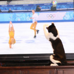 Story: My cats love the Olympics