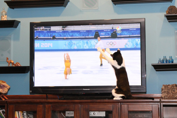 Cat watches Olympic figure skating