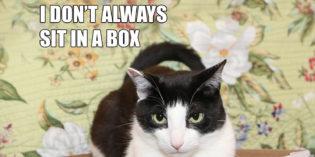 I Don't Always Sit In A Box #MostInterestingCatInTheWorld