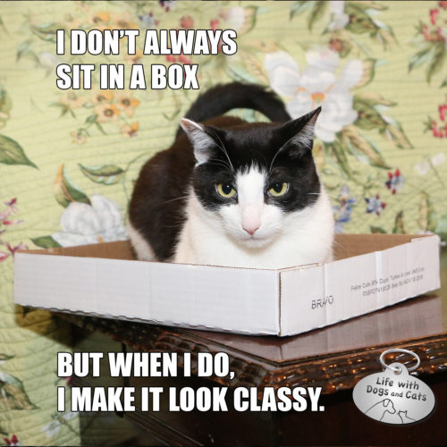 I Don't Always Sit in a Box, but when I do, I make it look classy.