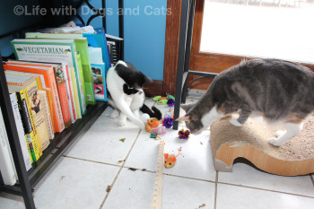 """They might even be enough to share? Well if therewere a word for """"share"""" in Cat."""