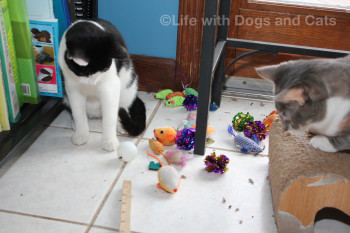 Two cats are watching the toy recovery.