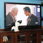 Cat story: Cats love Doctor Who