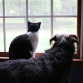 Friends share common interests. Calvin the cat and Tucker the dog really like to watch birds.