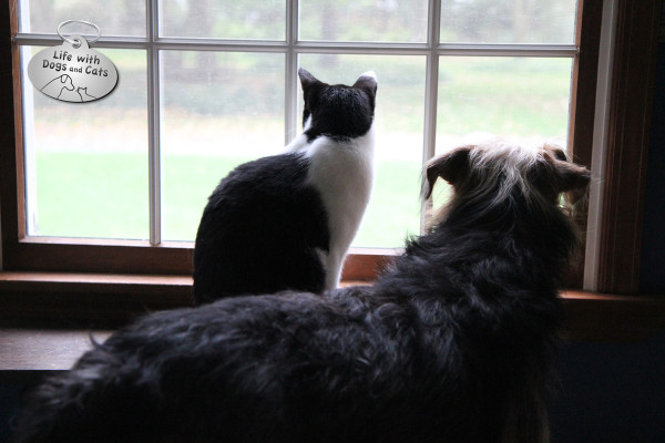 World Cat Day activity: hanging out with friends.