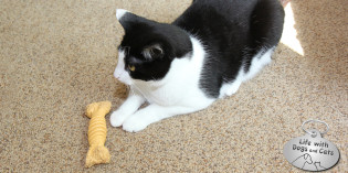 Photo: A cat has a dog bone. Discuss.