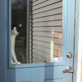 Calvin the cat would like me to come inside and feed him dinner