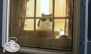 Haiku by Cat: Attraction