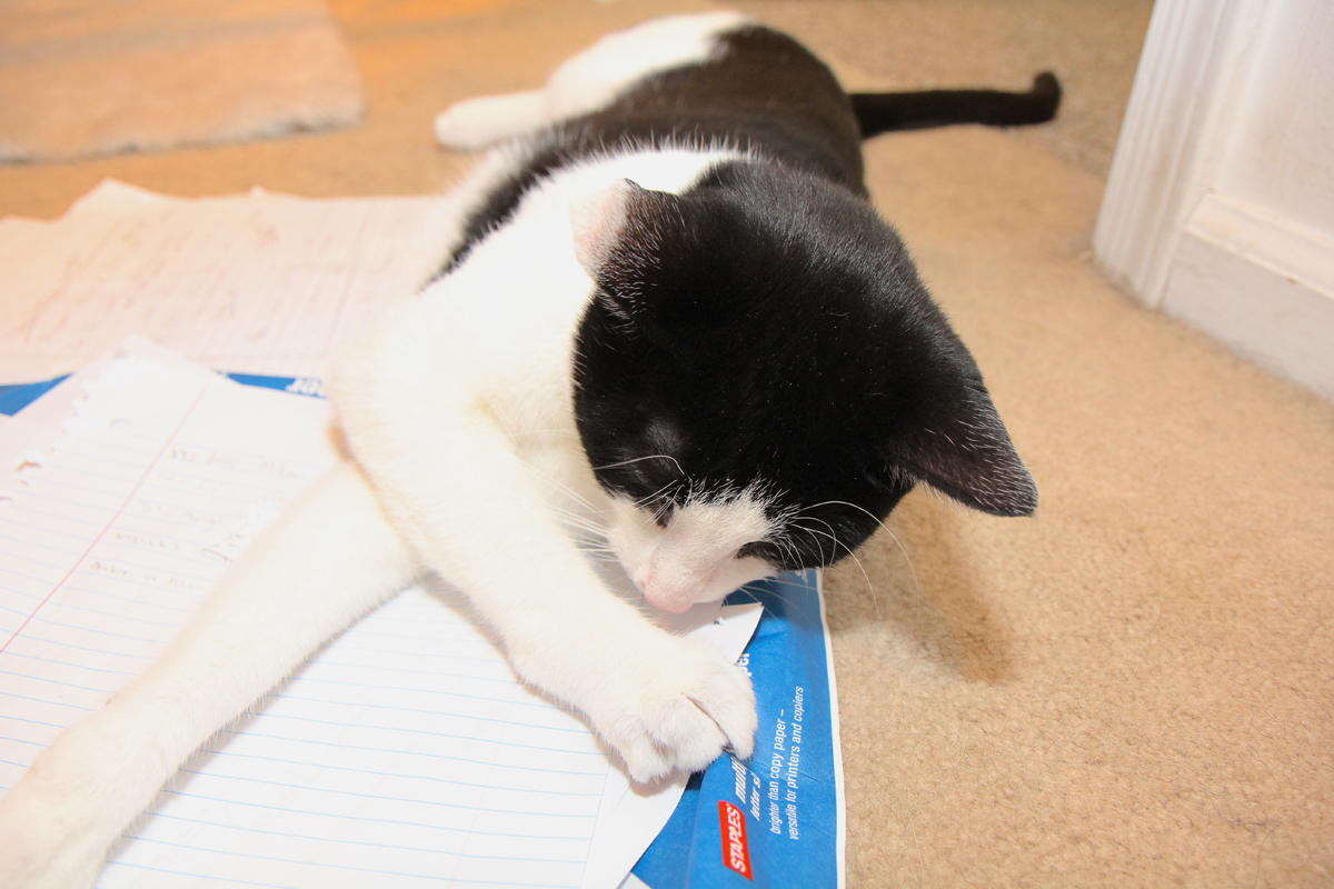 Calvin the cat rolls around on a stack of paper