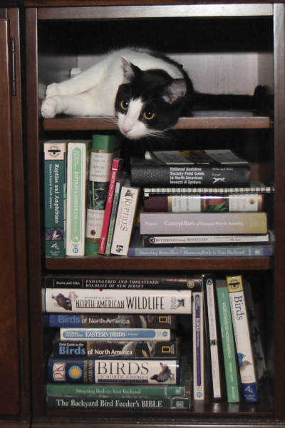Cat in a bookcase